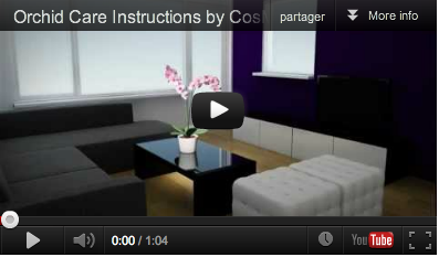 Comment Entretenir Les Orchidees Jpg Pictures to pin on Pinterest